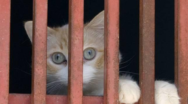gato_encerrado